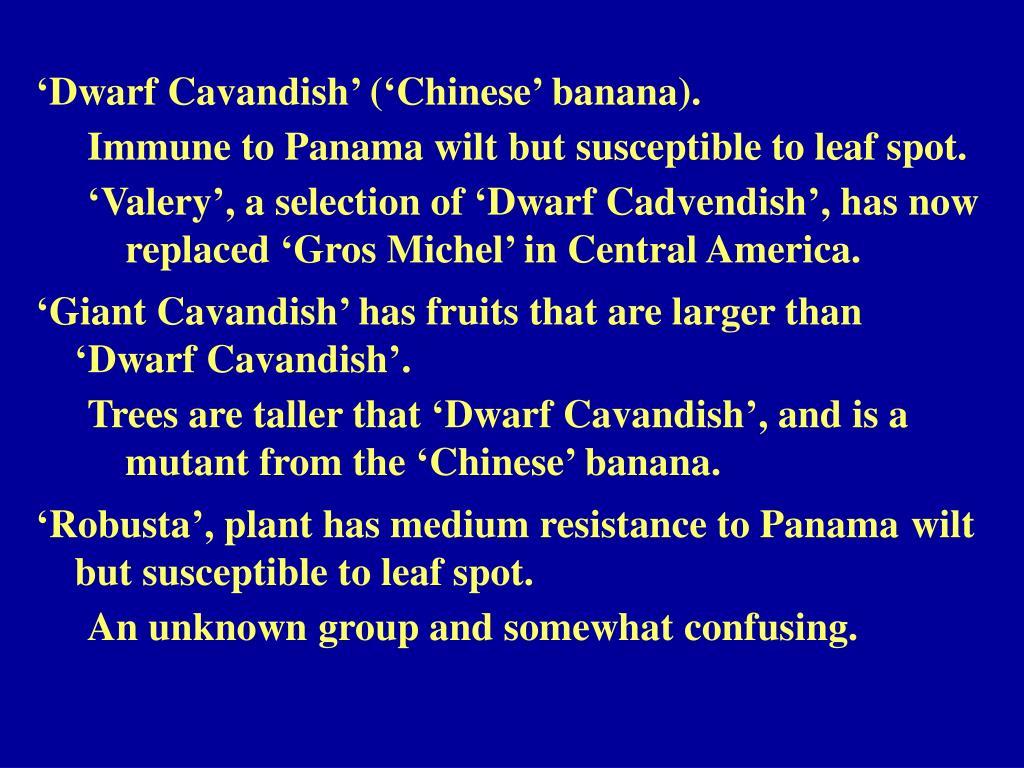 'Dwarf Cavandish' ('Chinese' banana).