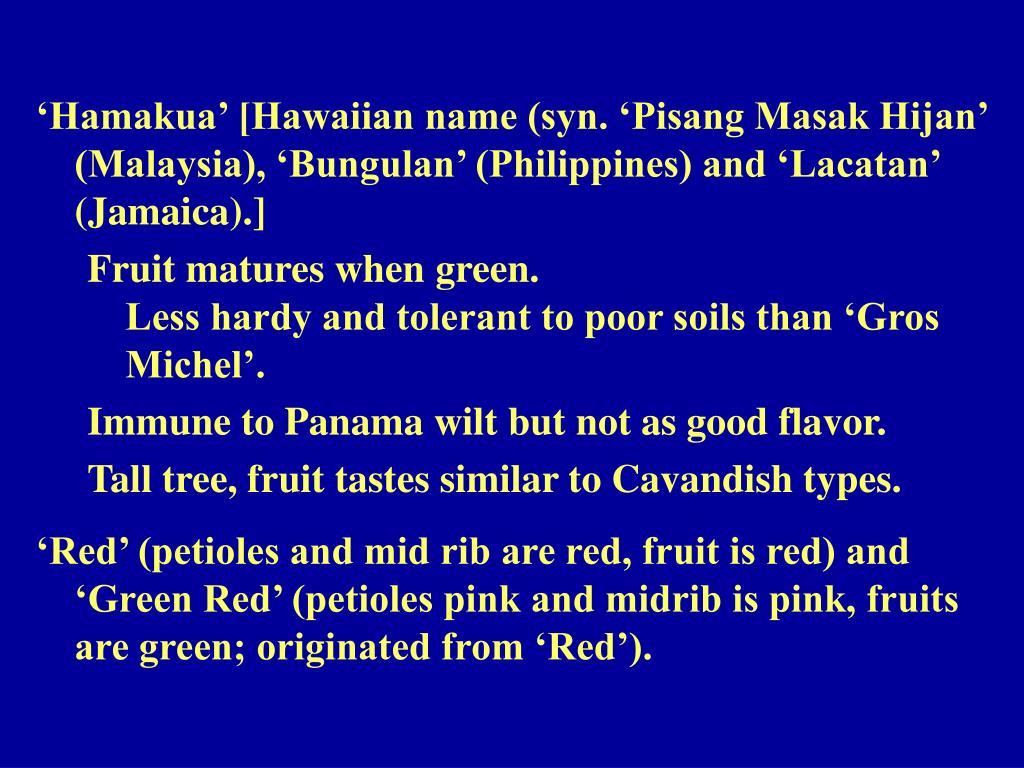 'Hamakua' [Hawaiian name (syn. 'Pisang Masak Hijan' (Malaysia), 'Bungulan' (Philippines) and 'Lacatan' (Jamaica).]