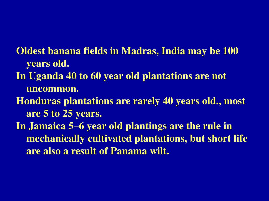 Oldest banana fields in Madras, India may be 100 years old.