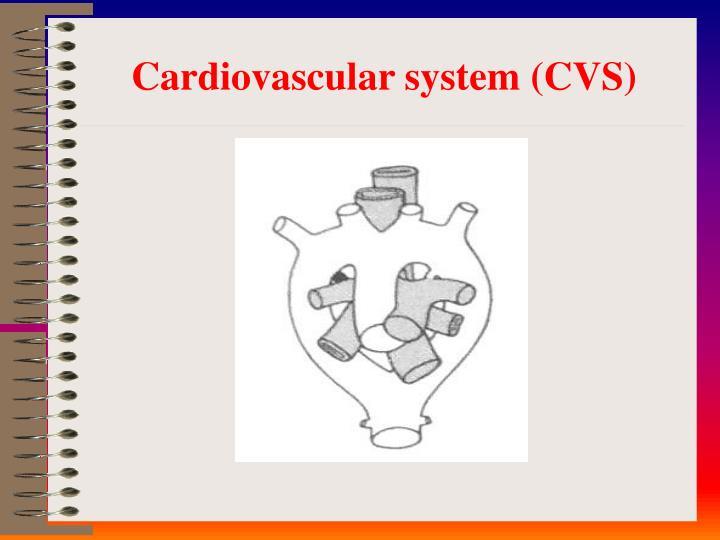 Cardiovascular system cvs