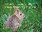 consumers consume other things to get their energy