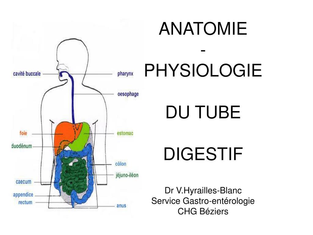 PPT - ANATOMIE - PHYSIOLOGIE DU TUBE DIGESTIF Dr V.Hyrailles-Blanc ...
