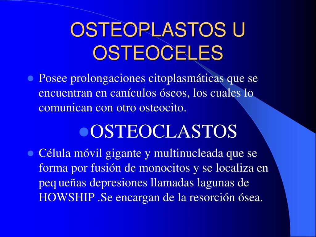 OSTEOPLASTOS U OSTEOCELES