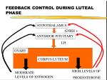 feedback control during luteal phase