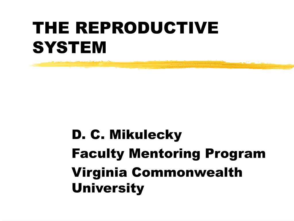 the reproductive system l.