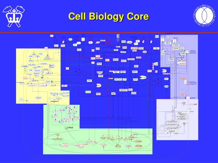 Cell biology core3