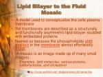 lipid bilayer to the fluid mosaic