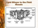 lipid bilayer to the fluid mosaic43