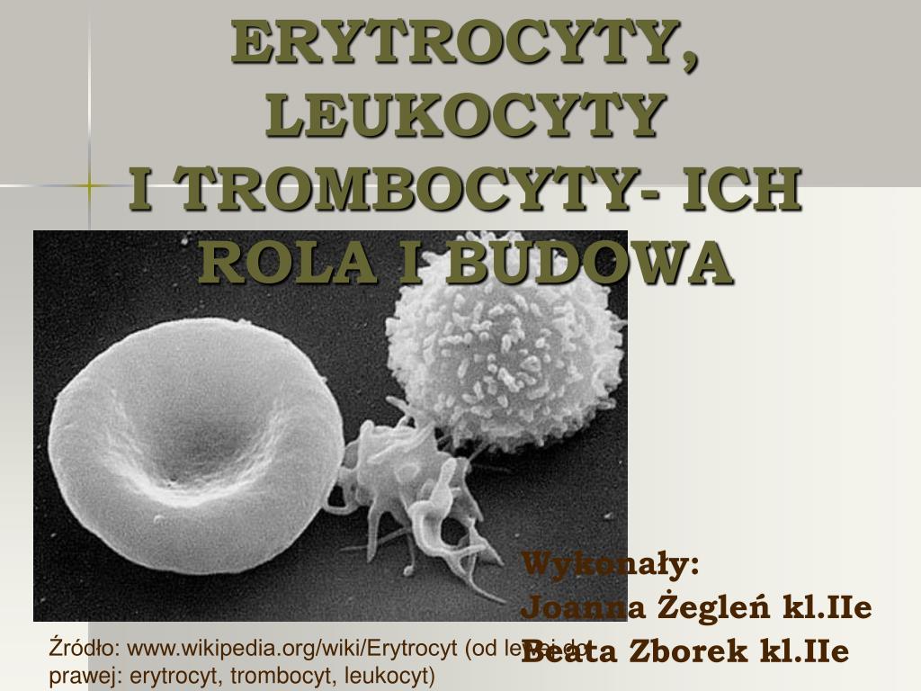 erytrocyty leukocyty i trombocyty ich rola i budowa l.