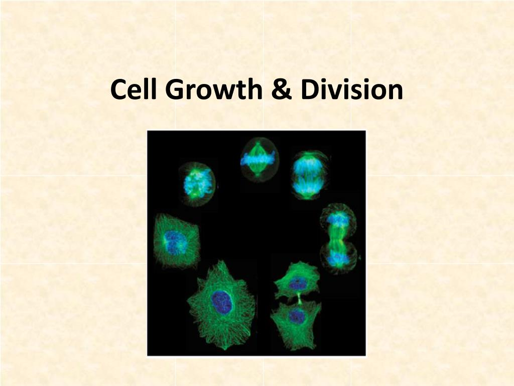 cell growth division l.