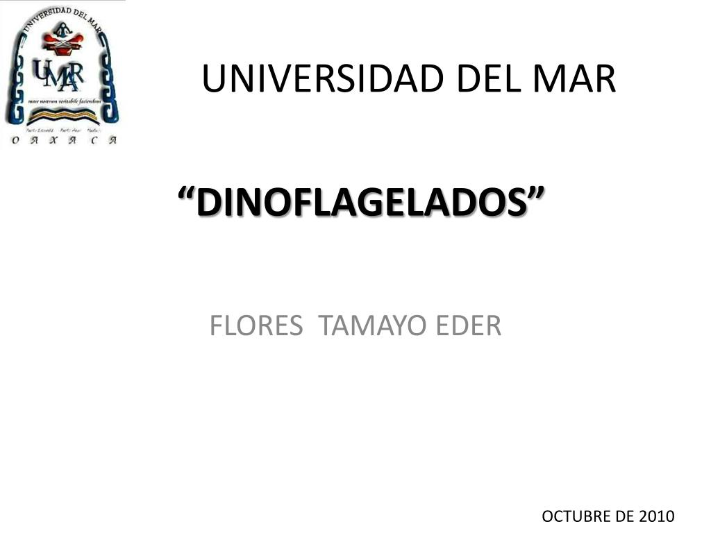 universidad del mar l.