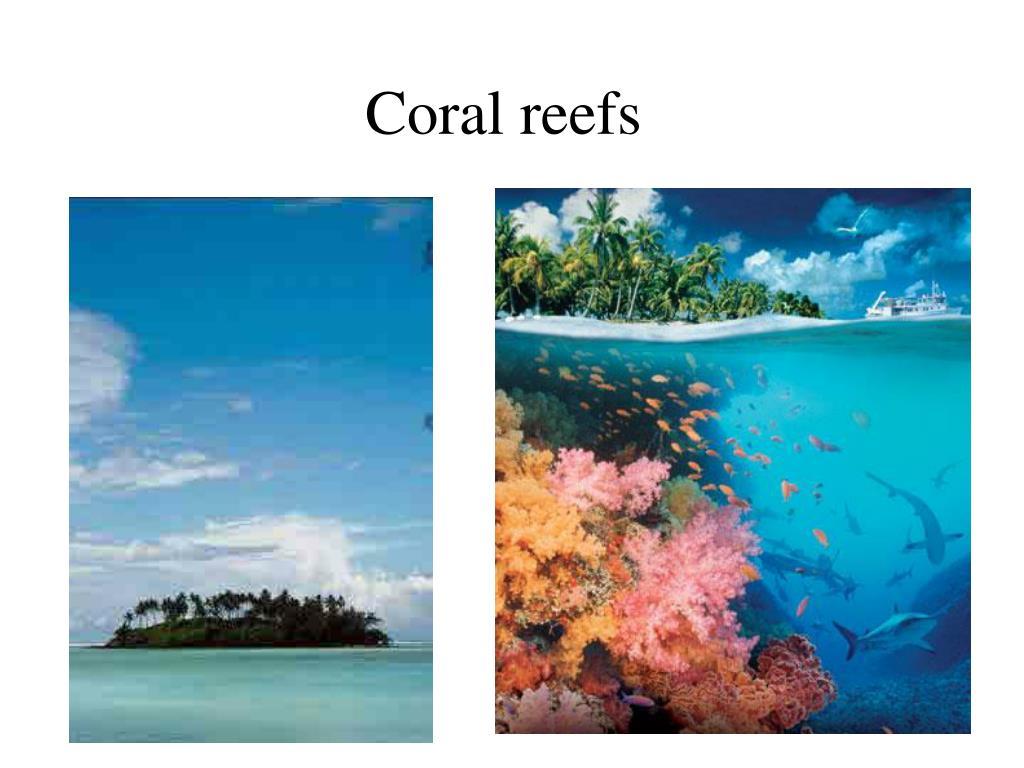 coral reefs l.