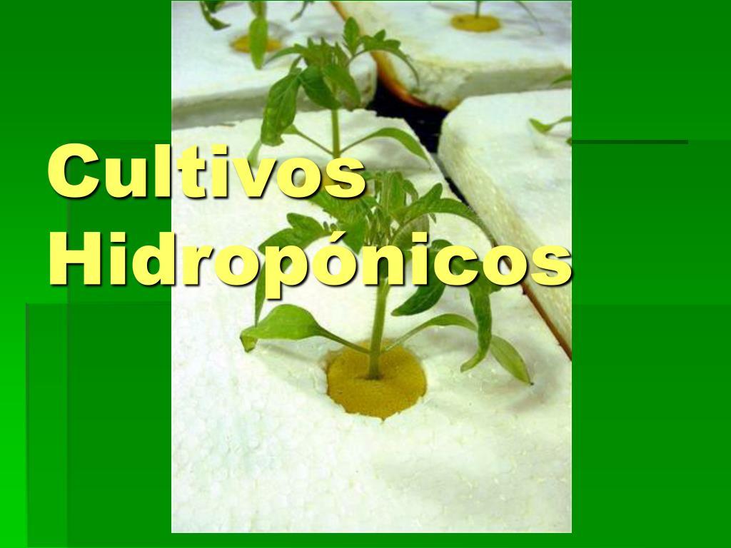 cultivos hidrop nicos l.