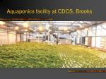 aquaponics facility at cdcs brooks