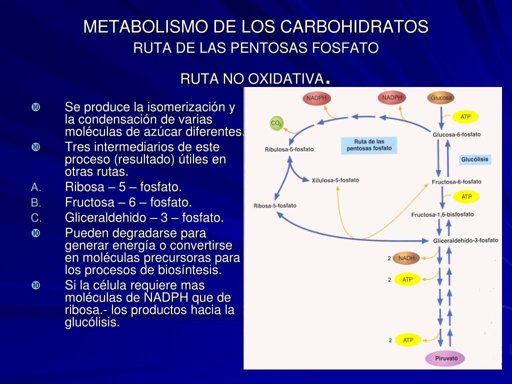el poder del metabolismo frank suarez pdf simptoms