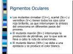 pigmentos oculares5