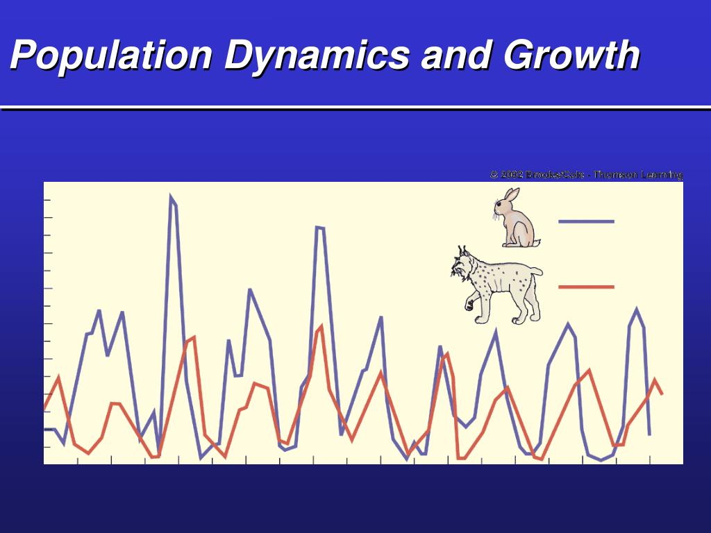 population dynamics and growth l.