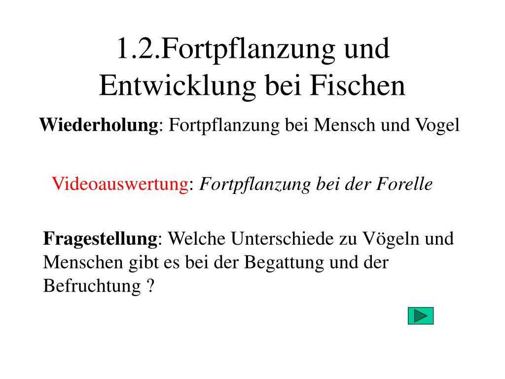 1 2 fortpflanzung und entwicklung bei fischen l.