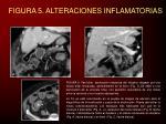 figura 5 alteraciones inflamatorias