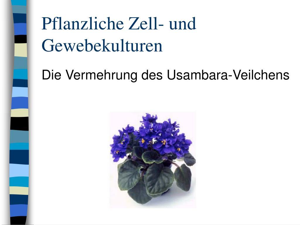 pflanzliche zell und gewebekulturen l.