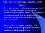 aire a key to tolerance induction in the thymus