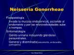 neisseria gonorrheae11