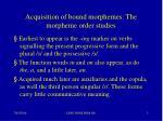 acquisition of bound morphemes the morpheme order studies