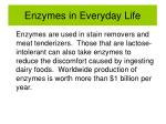 enzymes in everyday life