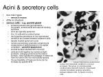 acini secretory cells