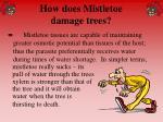 how does mistletoe damage trees