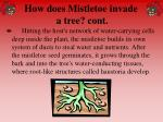 how does mistletoe invade a tree cont