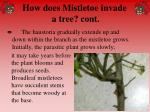 how does mistletoe invade a tree cont46