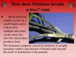 how does mistletoe invade a tree cont47