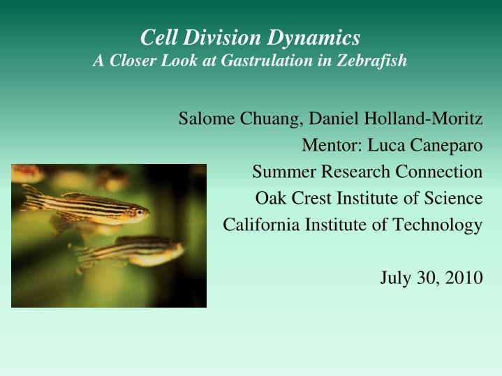 cell division dynamics a closer look at gastrulation in zebrafish n.