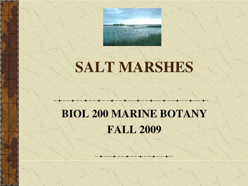 salt marshes l.