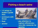 fishing a beach seine