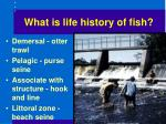 what is life history of fish