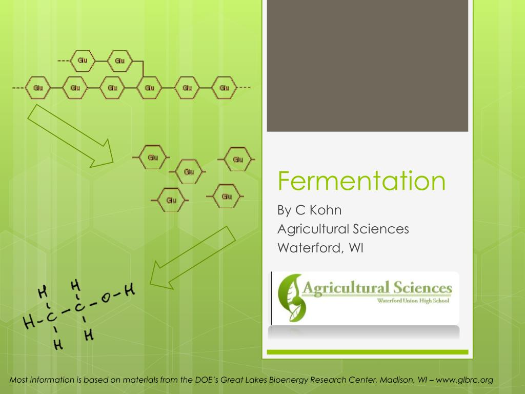 fermentation l.