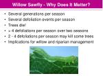 willow sawfly why does it matter