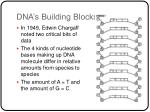 dna s building blocks5