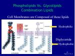 phospholipids vs glycolipids combination lipids