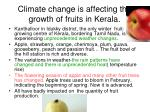 climate change is affecting the growth of fruits in kerala