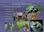 wildlife behavior