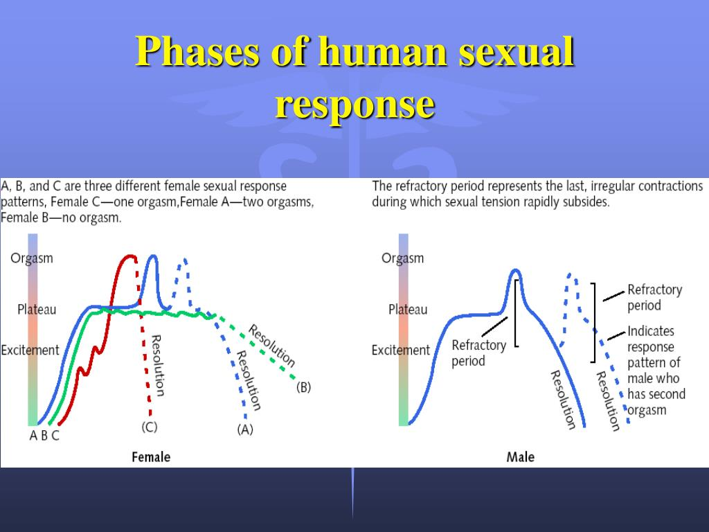 phases of human sexual response l.