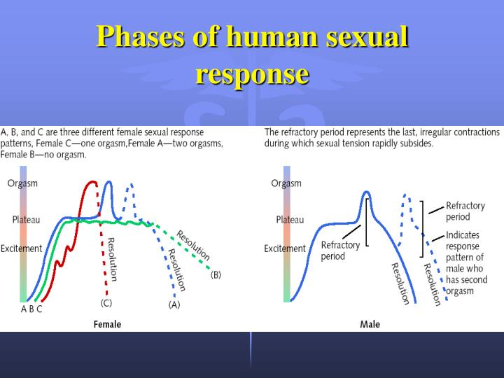 phases of human sexual response n.