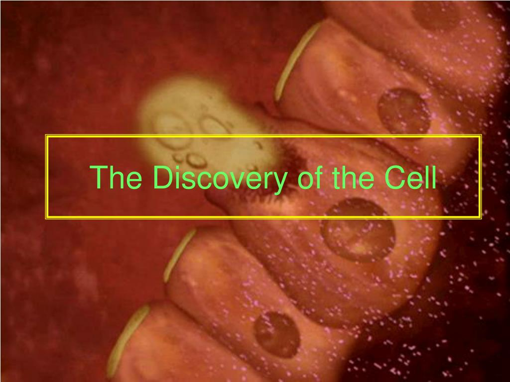 the discovery of the cell l.