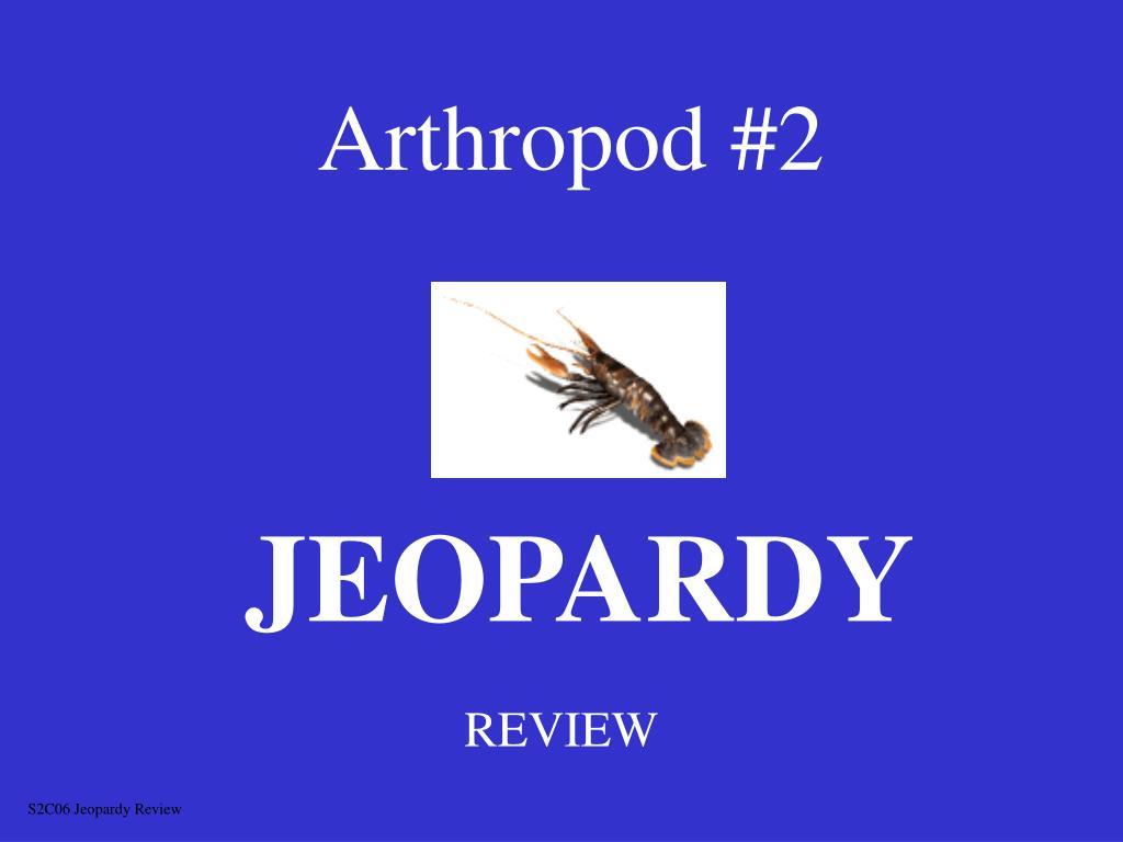 Arthropod #2