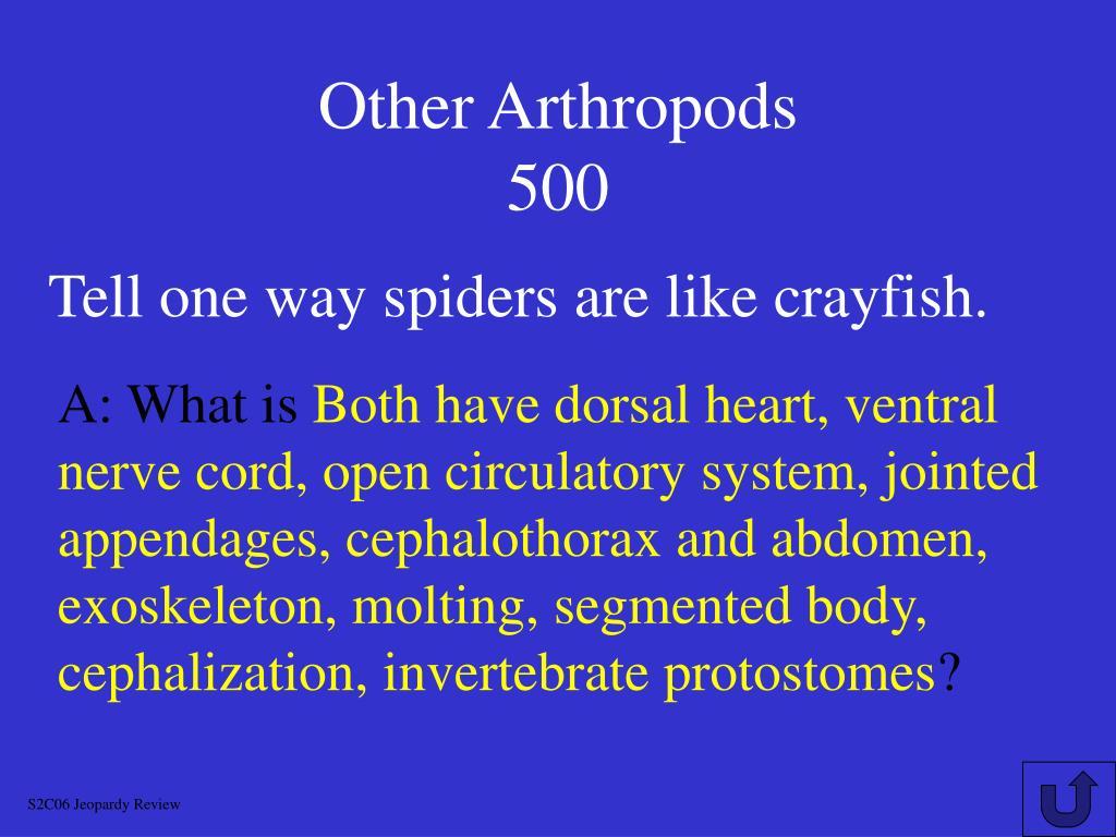 Other Arthropods