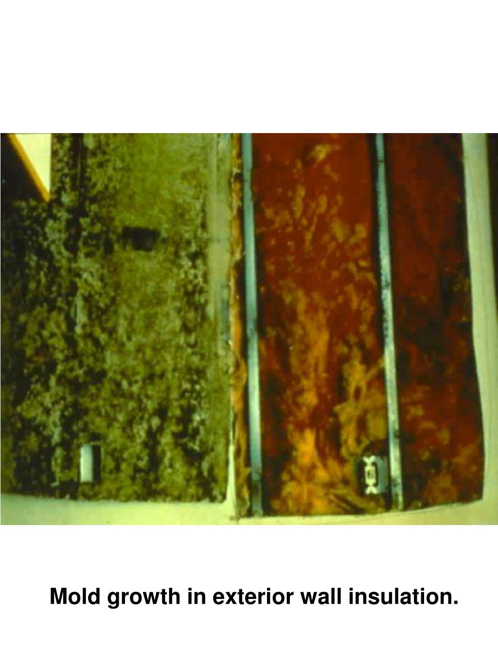 Mold growth in exterior wall insulation.