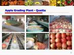 apple grading plant quetta12